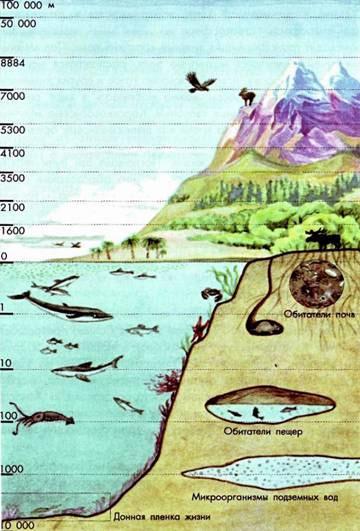 Распределение организмов в биосфере, рисунок картинка