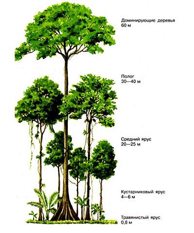 Пространственная структура биоценоза, рисунок картинка схема