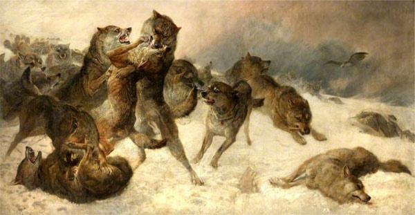 Смертельная битва между волками, рисунок картинка