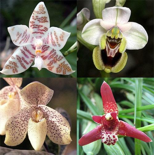 Виды орхидных. Фото, фотография природа