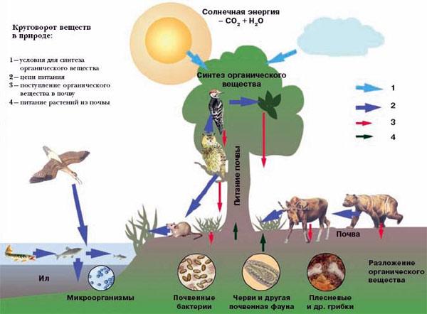 Схема круговорота воды в биосфере фото 591