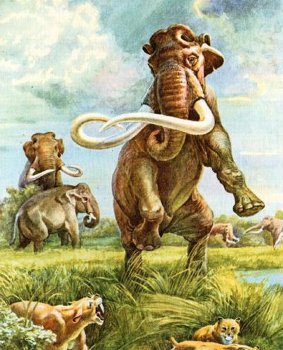 Мамонты, рисунок картинка исторические животные