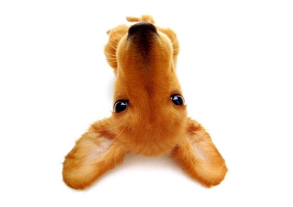 Загадки слуха животных Частота самого низкого звука который  Щенок лежит на спине фото собаки фотография картинка