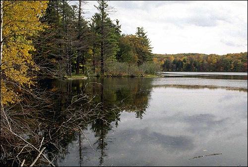 Осень. Берег реки. Лес. Фото, фотография природа