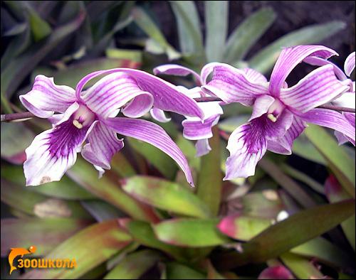 Орхидеи. Сад орхидей о. Бали. Фото, фотография картинка цветы