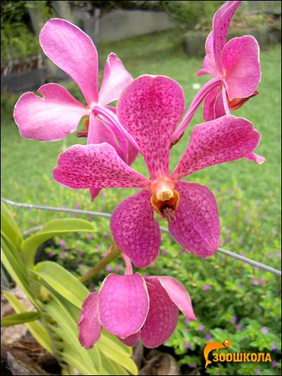 Орхидеи. Парк орхидей о. Бали. Фото, фотография цветы