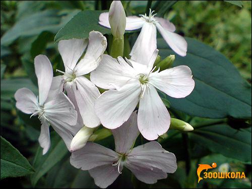 Цветы. Фото, фотография картинка