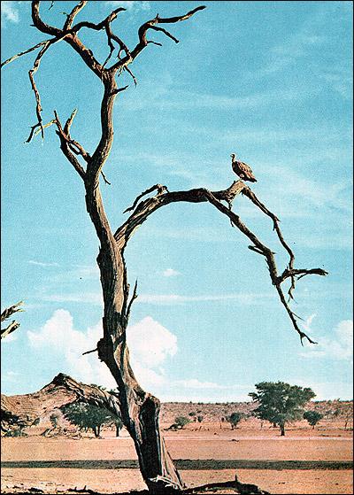 Африка. Местный пейзаж. Фото, фотография