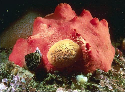 Под водой. Фото, фотография