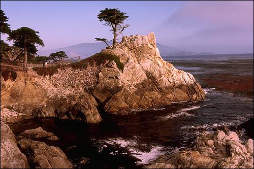 Дерево, растущее на скале около моря. Фото, фотография природа