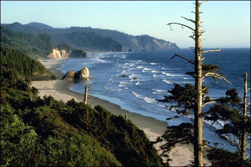 Хвойный лес, растущий на скалах около моря. Фото, фотография природа