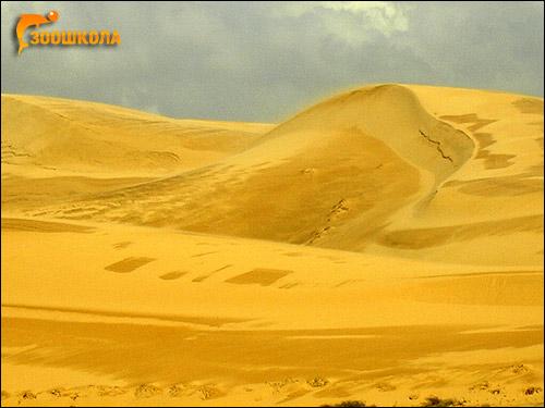 Южный Вьетнам. Пустыня после дождя. Фото, фотография