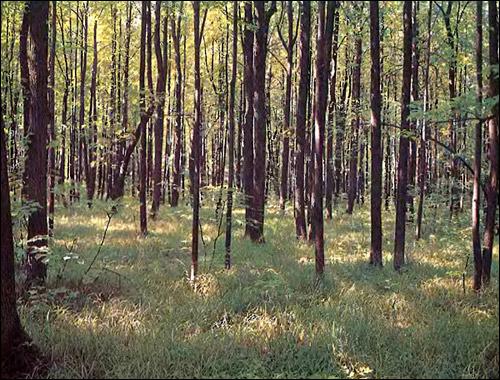 Летний лес. Фото, фотография