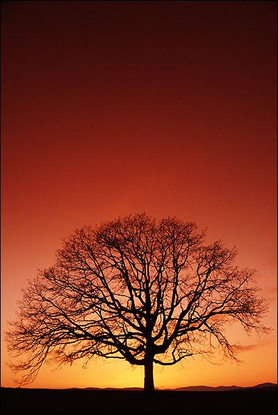 Одинокое дерево на фоне заката. Фото, фотография