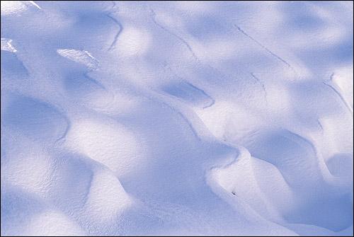 Снег. Фото, фотография