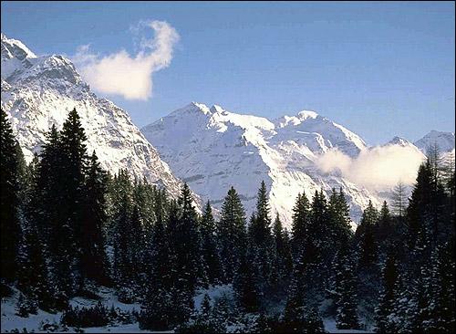 Высоко в горах. Хвойный лес. Фото, фотография