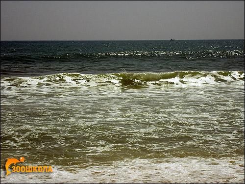 Южный Вьетнам. Океан. Фото, фотография