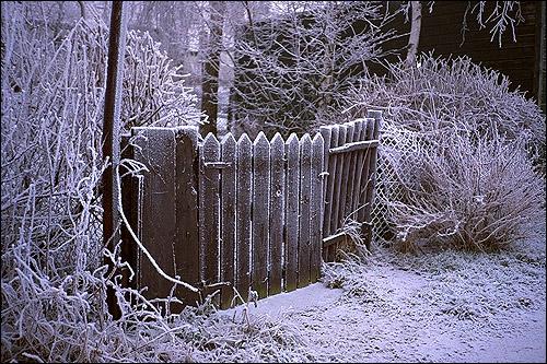 Иней (изморозь). Забор и сетка. Фото, фотография