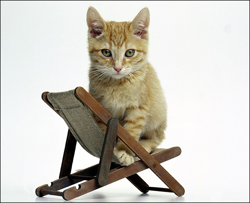 Рыже-белый котенок сидит на маленьком гамаке. Фото, фотография картинка кошки