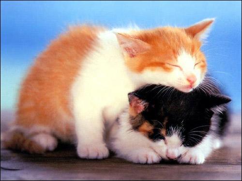 Бело-рыжий и черно-белый котенок спят вместе. Фото, фотография картинка кошки