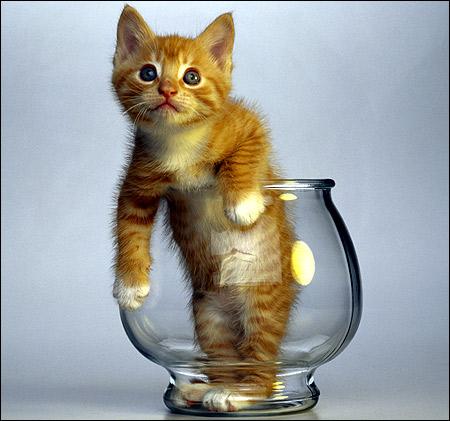 Рыже-белый котенок в большом бокале. Фото, фотография картинка породы кошек