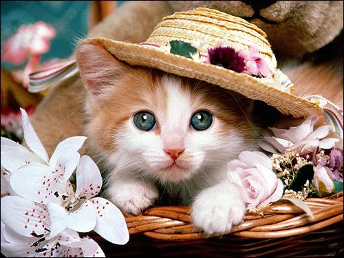 Котенок в соломенной шляпе. Фото, фотография картинка кошки