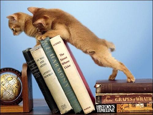 Котята-проказники, пытающиеся уронить книги с книжной полки. Фото, фотография картинка кошки