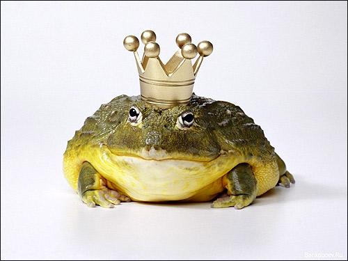 Жаба, царевна-лягушка. Фото, фотография