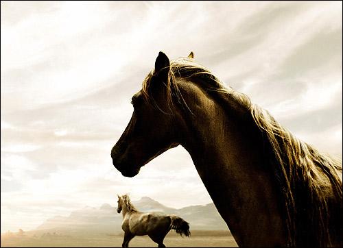 Лошади. Фото, фотография картинка