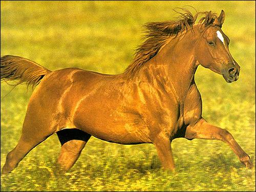 Лошадь на лугу. Фото, фотография картинка