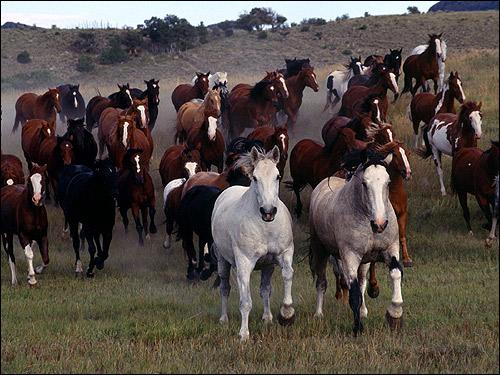 Табун лошадей. Фото, фотография картинка