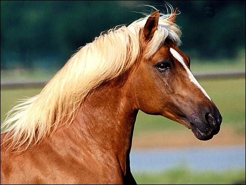 Голова лошади. Фото, фотография картинка