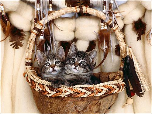 Котята в корзинке. Фото, фотография картинка кошки