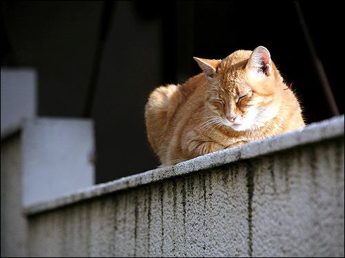 Рыжая кошка спит. Фото, фотография картинка животные