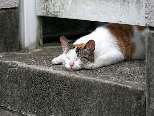 Кошка, спящая под дверью. Фото, фотография картинка