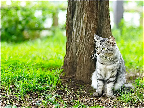 Кошка, сидящая около дерева. Фото, фотография картинка