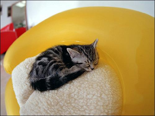 Спящий котенок. Фото, фотография картинка кошки