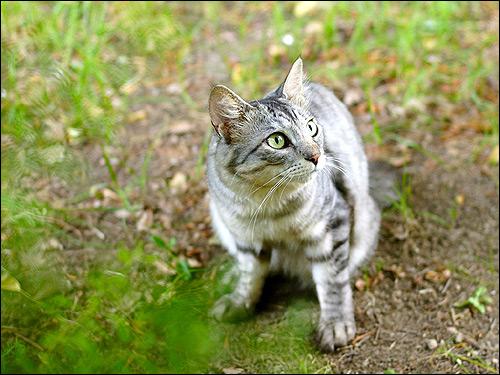 Кошка на улице. Фото, фотография картинка