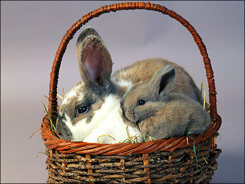 Крольчиха с крольченком в плетеной корзинке. Фото, фотография картинка животные