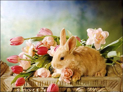 Кролик и цветы. Фото, фотография картинка животные