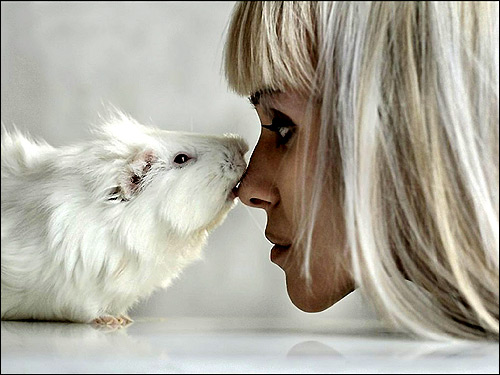 Девушка и морская свинка. Фото, фотография картинка грызуны