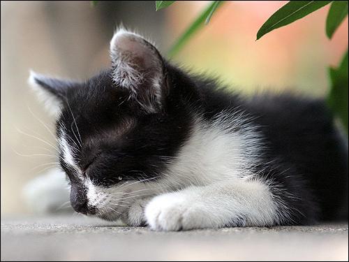 Спящая кошка. Фото, фотография картинка животные