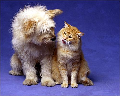 Собака и кошка, Фото фотография картинка животные