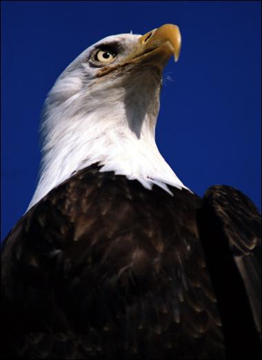 Фото фотография картинка хищные птицы