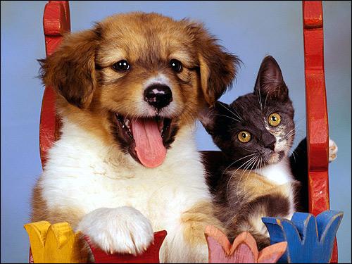 Щенок и котенок, Фото фотография картинка