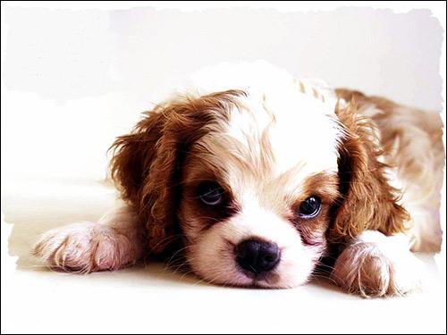 Как часто можно вязать собаку