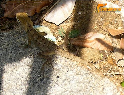 Ящерица, Фото фотография рептилии