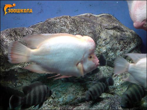 Рыбы. Владивостокский океанариум, Фото фотография