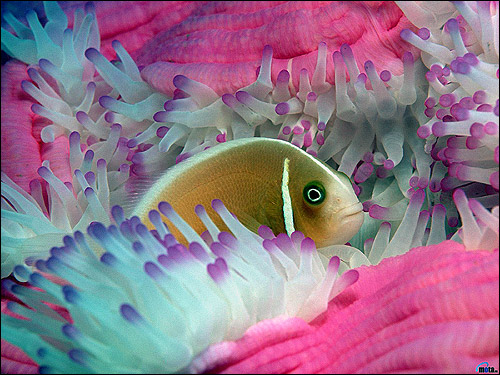 Рыбка в актинидии, Фото фотография, Кормление аквариумных рыбок