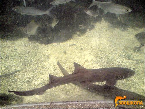 Владивостокский океанариум, Фото фотография